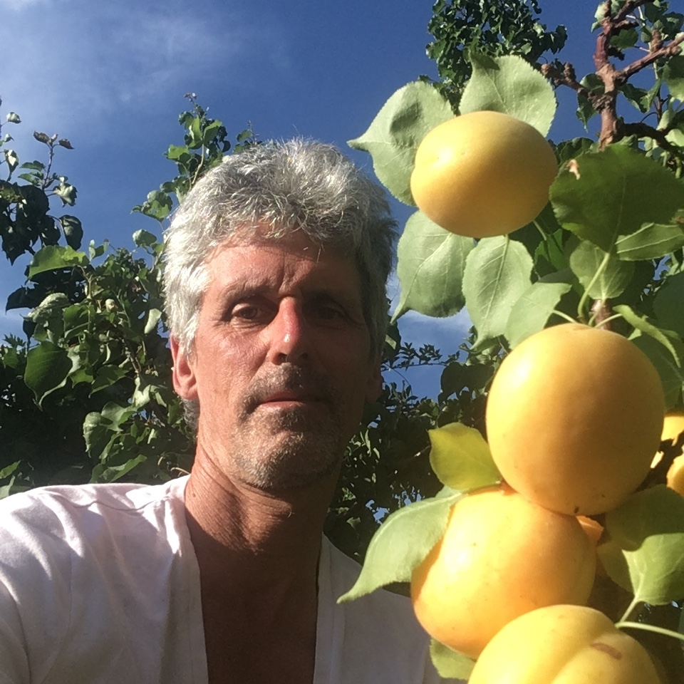 Marc posing with an apricot tree during the summer harvest.